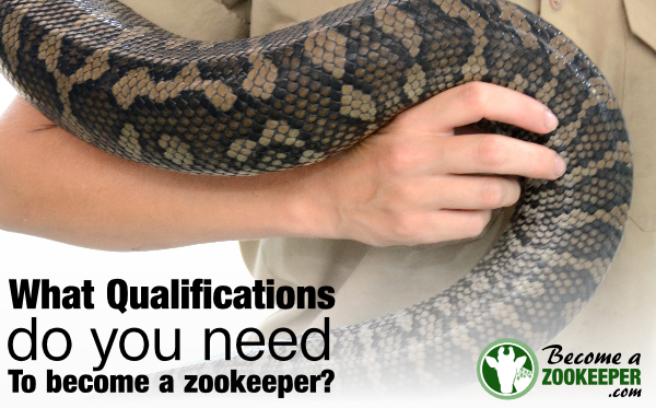 Zookeeper qualificationswhat you need to know Become a Zookeeper – Zookeeper Job Requirements