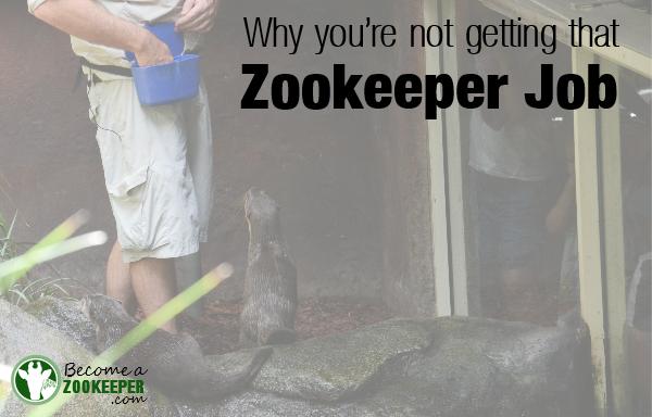 Zookeeper job