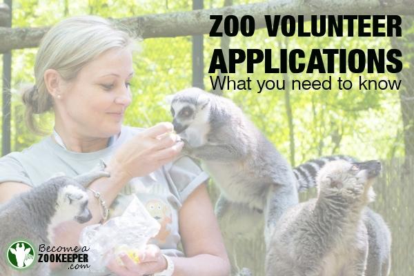 zoo volunteer applications